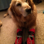Abby sporting Neopaws boots!