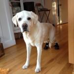 Boots Help My Dog Walk