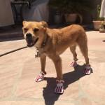 Boots for Arizona!