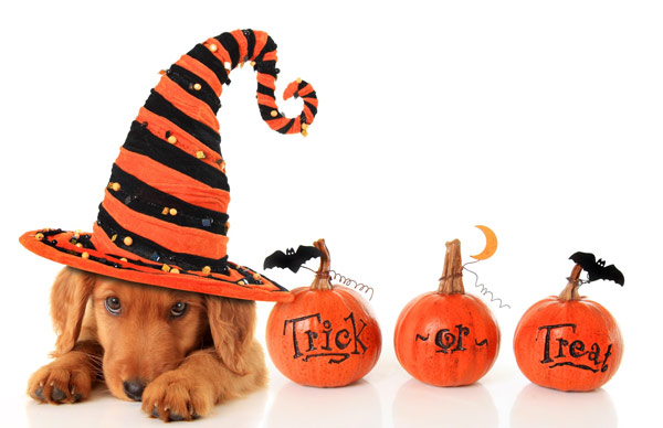 Halloween Safety for Dogs