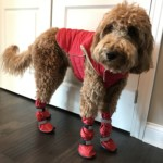 Emme is so cute in red booties