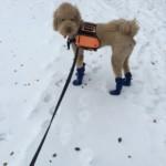 Si, my Service Dog