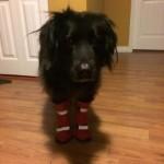 Snowy Dog Adventure!