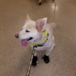 Bailey Loves Paw-Wear