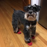 New Red Booties