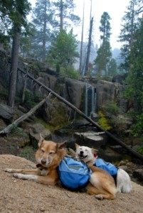 dog hiking on vacation with backpacks