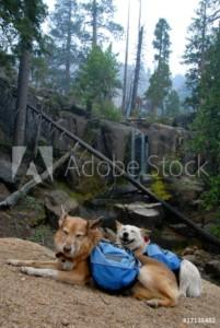 dog hiking vacation