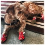 Dog Sandals!
