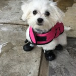 Fancy loves her new rain/snow boots