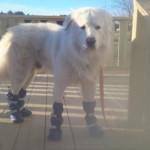 Chuck wearing winter booties