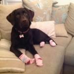 Tilly's pink socks
