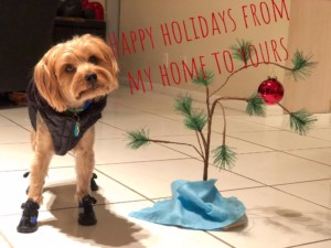 max-holidays-from-julia