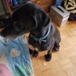 Moose in boots