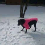 Loving My Dog Jacket!