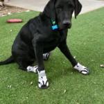 Saroo Has Hydrocephalus and Weak Back Legs