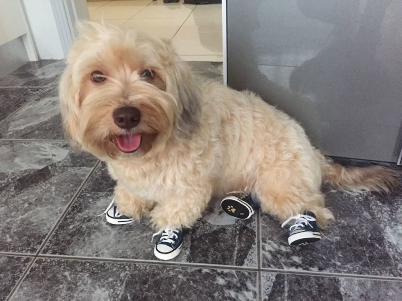 Dog Sneakers to Keep Paws Clean